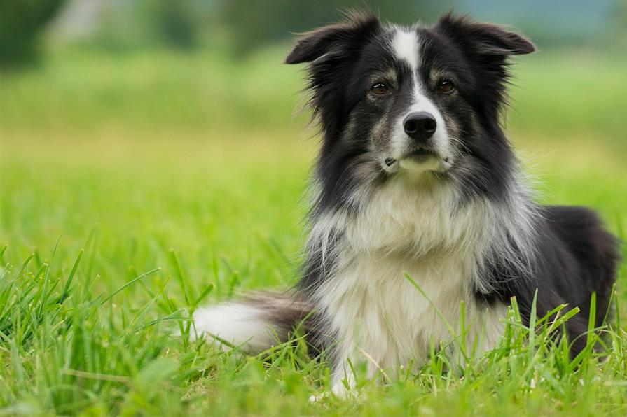 Djurutbildning tandvård för hund