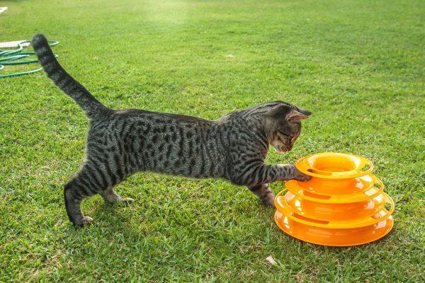 cat-3576373_960_720