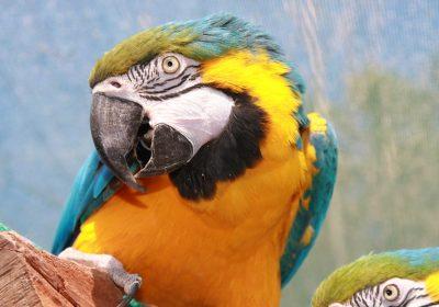 parrot-177386_960_720