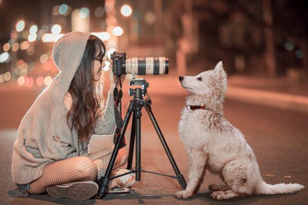 puppy-3688871_960_720
